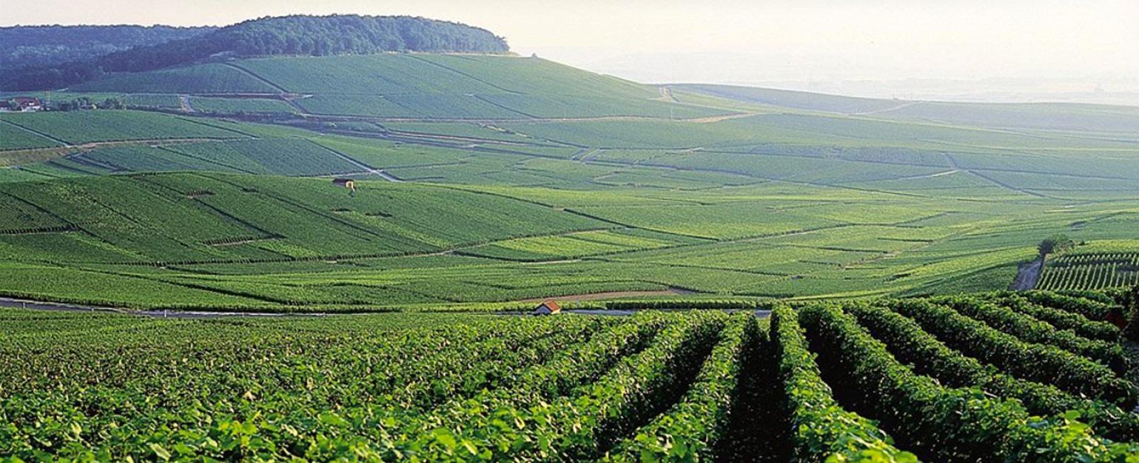 finest vineyards
